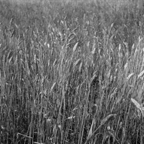Από το Α ως το Ω. Φωτογραφικές εκδοχές του ελληνικού αλφαβήτου